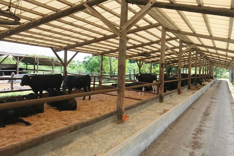 岩井農場の牛達