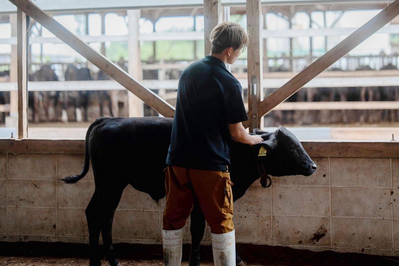 (株)ランズ 牛の健康管理
