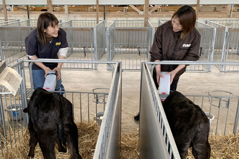 (株)ランズ 子牛への授乳