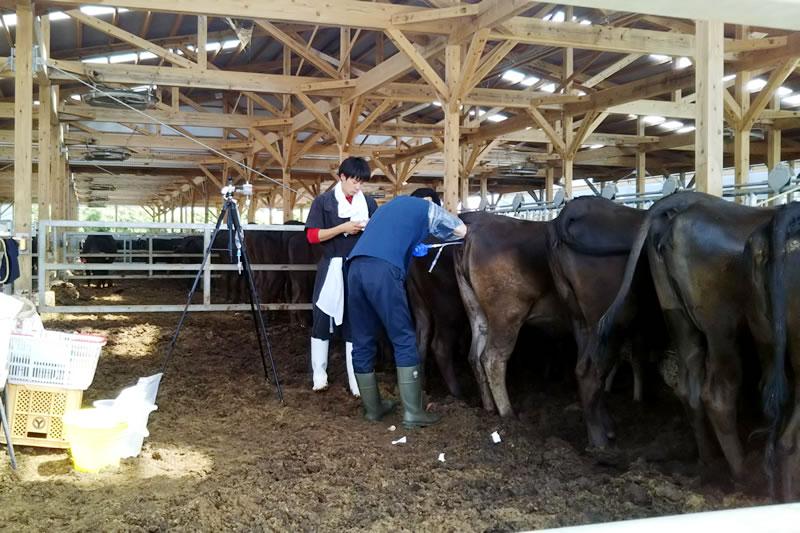 黒毛和種子牛の生産